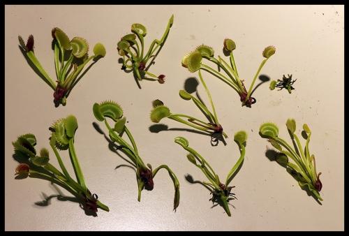 Pflanzen getrennt