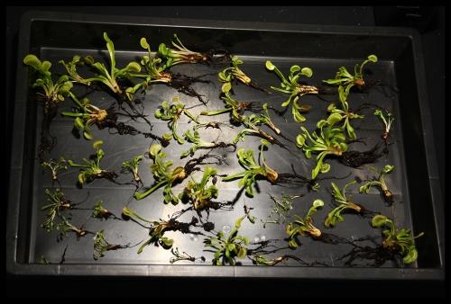 Pflanzen einzeln