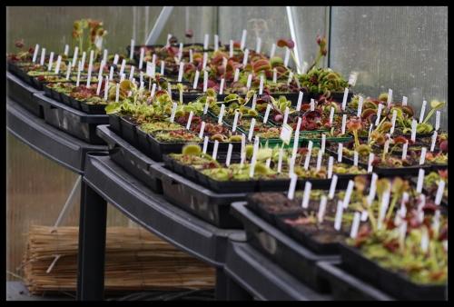 Die Pflanzen