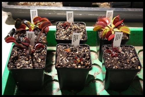 01 Pflanzen in Töpfen