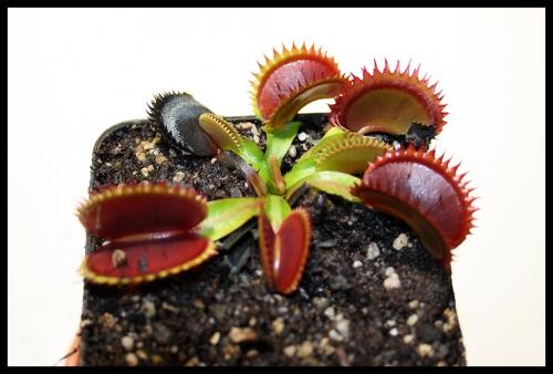 15 Pflanze sauber