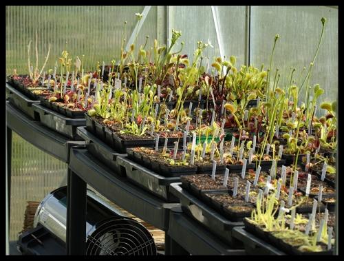 Dionaea-Ecke