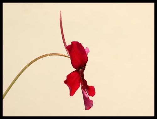 Blüte Seite