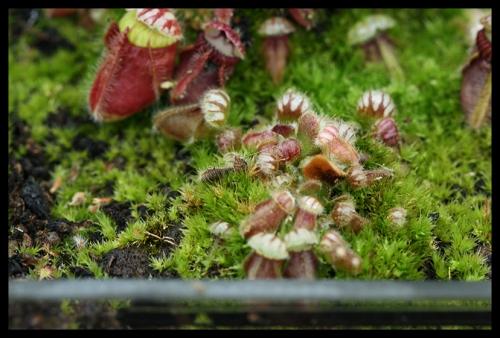 Seedgrown