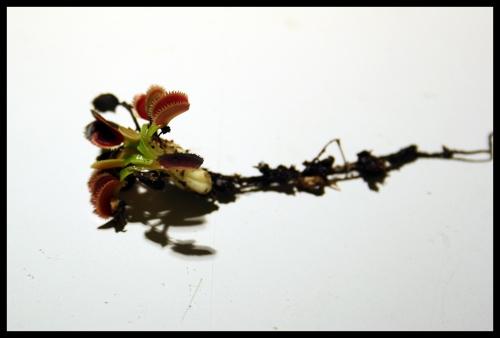 05 Pflanze mit Wurzel