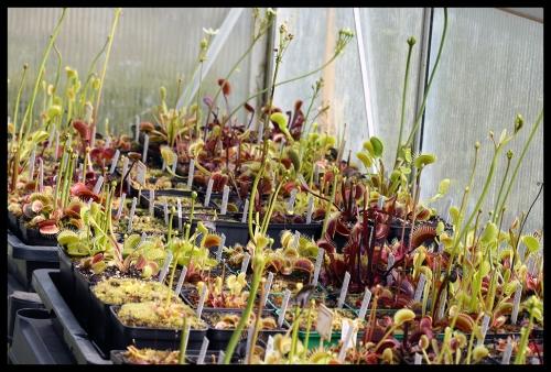 Dionaea Überblick