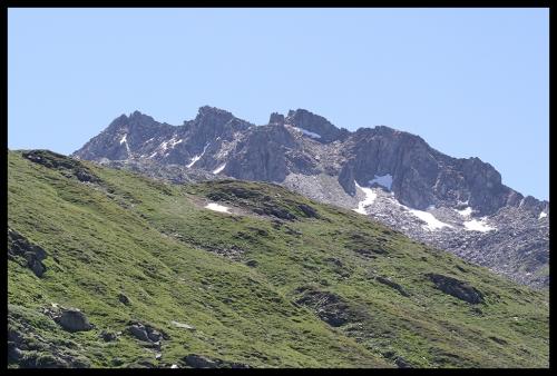Pinguicula am Gotthard-Pass Juni 2011