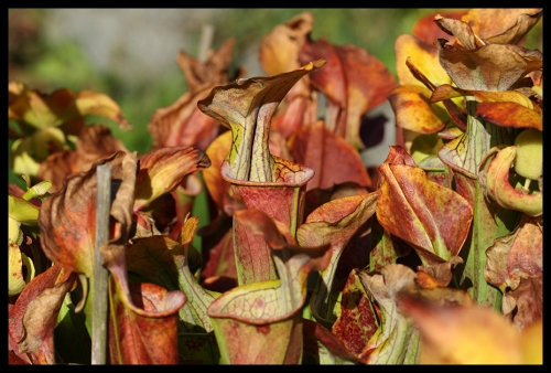 Herbstimpressionen Oktober 2016