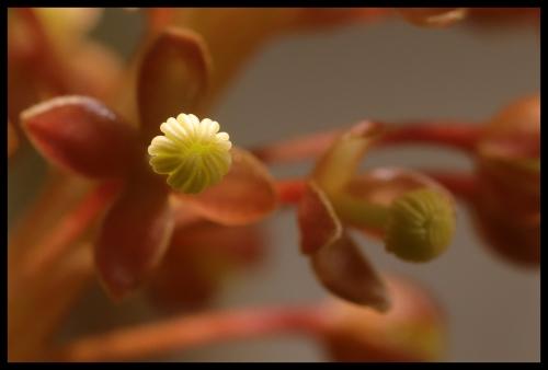 Blüte offen