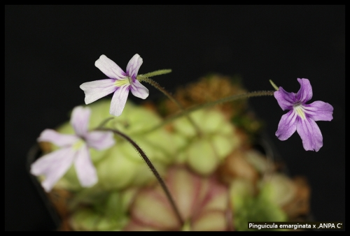 Blüten Februar 2016